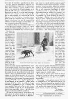 LA TRACTION DES BICYCLETTES Par Des CHIENS   1894 - Transports