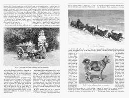 LES CHIENS DE TRAITS  1894 - Transportation