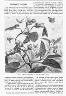 LES PLANTES CRUELLES   1894 - A. Plantes Vertes
