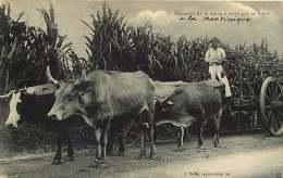 260818A - MARTINIQUE Transport De La Canne à Sucre Par Les Boeufs - Martinique