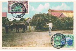 OX TOAM  TRINIDAD    T183 - Trinidad