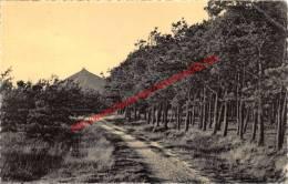 De Dennebossen - Les Sapinères - Eisden Maasmechelen - Maasmechelen