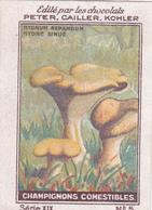 Chromo Publicitaire 4 X 6 Champignon Comestible Mushroom Pilz Hydne Sinué - Nestlé