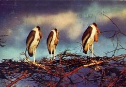 Periple En Afrique Australe - V. Swaziland - Marabouts - Formato Grande Viaggiata – E 7 - Cartoline