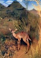 Nairobi - Beby Lesser Kudu - The National Museum - Formato Grande Viaggiata – E 7 - Cartoline