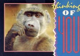 Monkey Talk - Kruger National Park - Formato Grande Viaggiata – E 7 - Cartoline