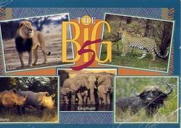 The Bi 5 - Lion - Leopard - Rhino - Elephant - Buffalo - Formato Grande Viaggiata – E 7 - Cartoline