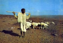 Jeune Berger - Djibouti - Formato Grande Non Viaggiata – E 7 - Cartoline