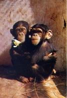 La Cote Occidentale D'afrique - Congo - Maman Et Bebe Chimpanzes - Formato Grande Viaggiata – E 7 - Cartoline