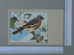 BIRDS - FRINGILLLA COELEBS -  CHATFINCH -   2 SCANS  - (Nº24734) - Birds