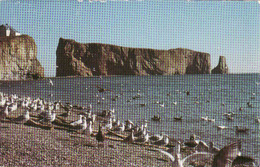 Canada > Quebec, Perce, Obliteree 1986 - Percé