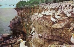 Canada > Quebec, Perce, Birds Sanctuary, Obliteree 1970 - Percé