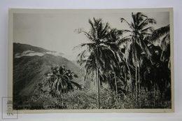 Postcard Venezuela - Las Palmeras - The Palm Trees - Near Caracas - Unknown Publisher - Venezuela