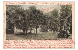 TRINIDAD - TRINIDAD Government Gardens, Pionnière - Trinidad