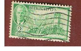 BARBADOS - MI  185  -   1950   SUGAR CANE  -  USED° - Barbados (...-1966)