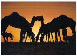 1 AK Bahrain * Sunset In The Desert - Dromedare * - Bahreïn