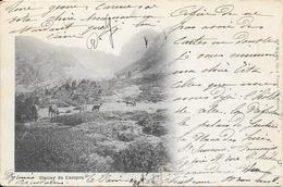 1903 - Glacier Du Canigou Edit Malard Fils à Vernet Les Bains (carte Précurseur) - France