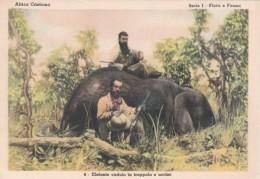 Missions Africa Cristiana Elephant Hunter Elefante Caduto In Trappola E Ucciso - Cartes Postales