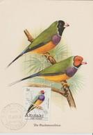 Aitutaki Carte Maximum 1981 Oiseaux 277 - Aitutaki
