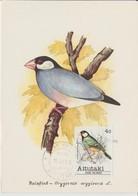 Aitutaki Carte Maximum 1981 Oiseaux 283 - Aitutaki