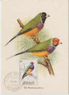 Aitutaki Carte Maximum 1984 Oiseaux 380 - Aitutaki