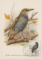 Aitutaki Carte Maximum 1984 Oiseaux 381 - Aitutaki