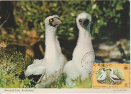 Kiribati Carte Maximum 1982 Oiseaux 65 Fou Masqué - Kiribati (1979-...)
