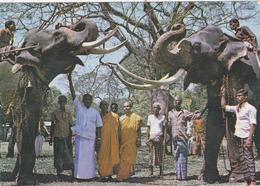 ASIE,ASIA,SRI LANKA,CEYLON,CEYLAN,ELEPHANT - Sri Lanka (Ceylon)