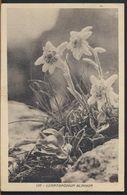 °°° 11294 - LEONTOPODIUM ALPINUM - 1949 °°° - Plantes Médicinales