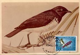 37312 Yemen, Maximum 1985 Bird, Black Bird, Amsel, Merle - Altri