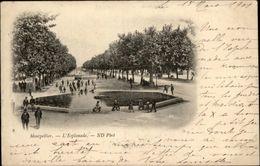 34 - MONTPELLIER - Esplanade - Carte Nuage - Montpellier