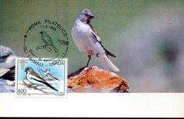 37317 Italia, Maximum  1995,  Fringuello Alpino, Fink,  Finch - Sparrows