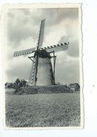 Overpelt Windmolen - Overpelt