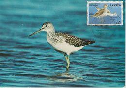 Lesotho Carte Maximum 1989 Oiseaux 856 - Lesotho (1966-...)
