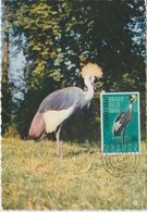 Ouganda Carte Maximum 1965 Oiseaux Grue 62 - Ouganda (1962-...)