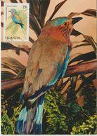 Ouganda Carte Maximum 1987 Oiseaux Rollier 472 - Ouganda (1962-...)