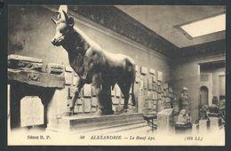 +++ CPA - Afrique - EGYPTE - ALEXANDRIE - Le Boeuf Api   // - Alexandrie