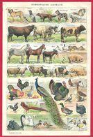 Animaux Domestiques, Chiens, Chats, Vaches, Chevaux..., Illustration Adolphe Millot, Larousse 1908 - Autres