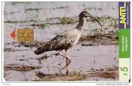 Nº 69 TARJETA DE UN PAJARO DE URUGUAY  BANDURRIA MORA (BIRD) - Non Classificati