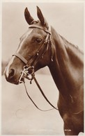 Postcard Close Up Study Of Horse Titled A Good Companion RP By Valentine's Animal Series My Ref  B12411 - Horses