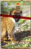 St. Kitts & Nevis - STK-C9, C&W, Monkey, Fauna, Animals, 10EC$, 2000, Mint NSB - Saint Kitts & Nevis