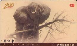 TARJETA TELEFONICA MAGNETICA DE CHINA USADA. ELEPHANT, P0035(4-3)A. (005) - Jungle