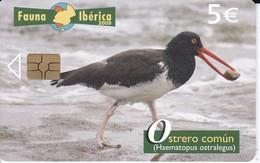 NOVEDAD! TARJETA DE FAUNA IBERICA OSTRERO COMUN TIRADA 65010  (BIRD-PAJARO) - España