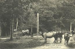 QUIMPERLE  -- Entrée En Forêt De Carnoët, La Colonne St-Maurice                __  ? - Quimperlé