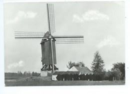 Zingem - Molen 't Dal, Oudste Molen Van België - Zingem