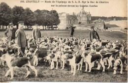CHANTILLY  Chasse à Courre  Meute De L'équipage De S.AR Mgr Le Duc De Chartres Sur La Pelouse Devant Les Grandes Ecuries - Hunting