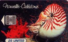 TARJETA TELEFONICA DE NUEVA CALEDONIA. Nautilus Macromphalus - Aquarium Municipal De Nouméa, NC-038 - Without Cont (002) - New Caledonia