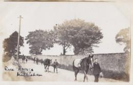 AR76 Animals - Race Horses At Middleham - RPPC - Horses