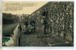 77-02 FONTAINEBLEAU La Cueillette Du Raisin Treille Du Roy  Ouvriers Au Travail 1910       /D03-2016 - Fontainebleau