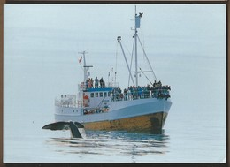 NO.- ANDENES. Hvalsafari. Whalesafari. Walvissafari. Op Het Schip REINE. 1998. NORGE. - Noorwegen